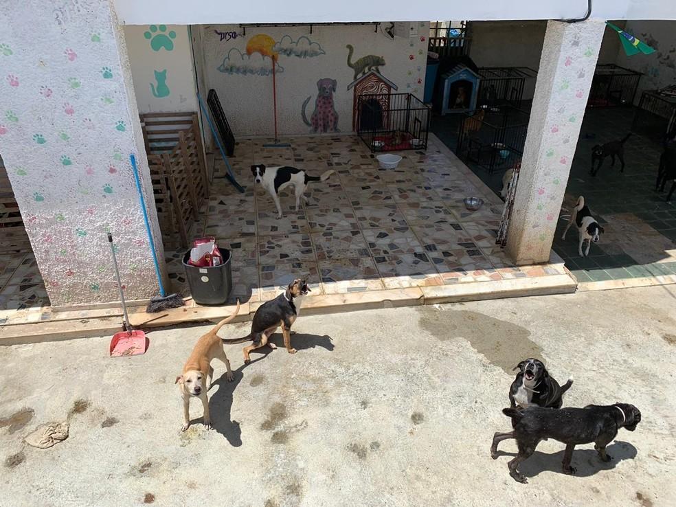 Animais mantidos na sede do abrigo Pata Voluntária no bairro do Trapiche, em Maceió — Foto: OAB-AL