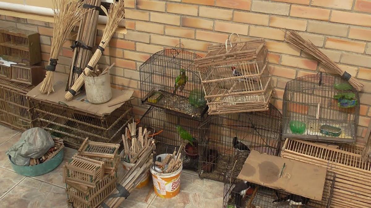 Mais de 70 aves silvestres vendidas ilegalmente são resgatadas em Catolé do Rocha, na PB