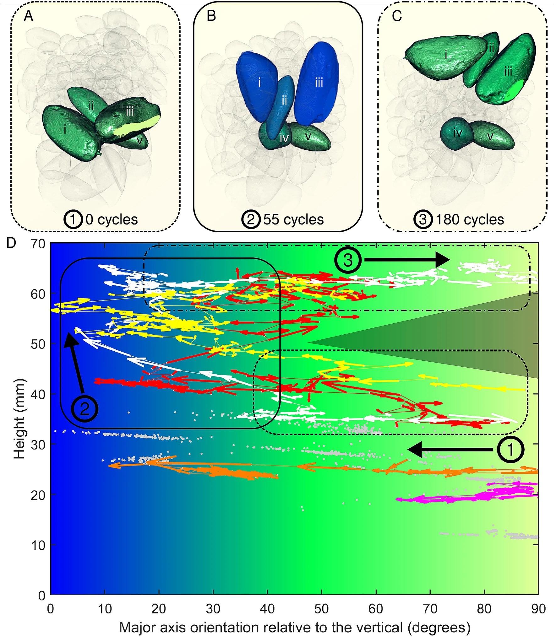 Segundo os pesquisadores, a orientação da castanha-do-pará é a chave para seu movimento ascendente. Acima, imagem ilustra movimento das castanhas do Brasil e amendoins ao longo do tempo. (Foto: Scientific Reports/Reprodução)