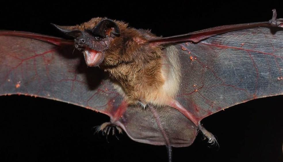 Rio Grande do Norte soma três casos de raiva em morcegos em 2019 — Foto: Prefeitura de Piracicaba