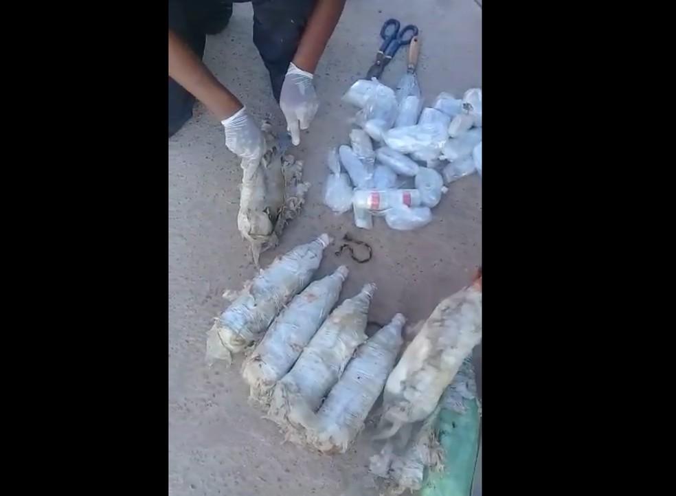 Polícia investiga origem do material — Foto: Iapen/Divulgação