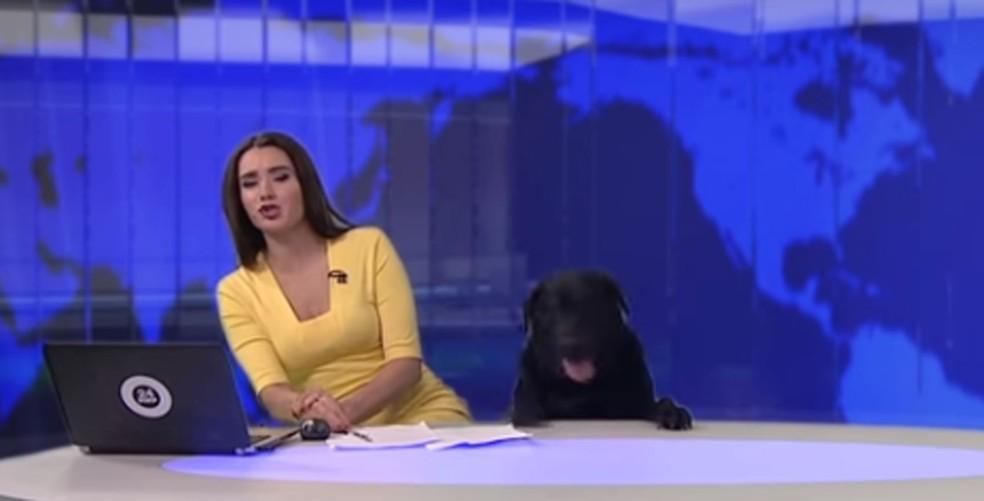 Cão interrompe telejornal ao vivo na Rússia (Foto: World 24/Twitter)
