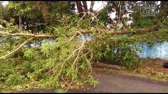 Londrina registra quedas de árvores após ventos de mais de 100 km/h