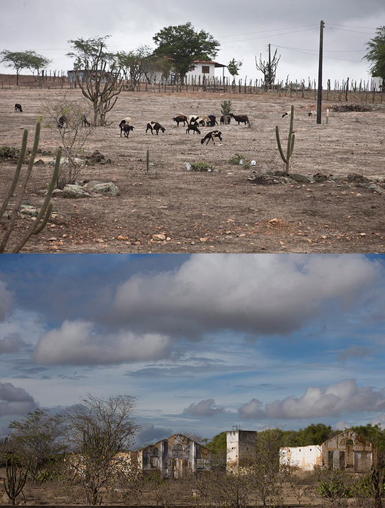 Os Cariris da Paraíba se estendem por 29 municípios e estão entre as áreas mais atingidas pela desertificação. A seca iniciada em 2012 só agravou um processo causado pela degradação do solo por desmatamento e criação extensiva de cabras e ovelhas (Foto: MÁRCIA FOLLETO/AGÊNCIA O GLOBO)