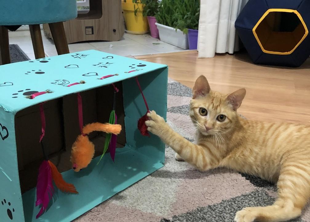 Criar novos brinquedos para os gatinhos pode ser uma atividade interessante nesta quarentena — Foto: Acervo Pessoal/Juliana Damasceno