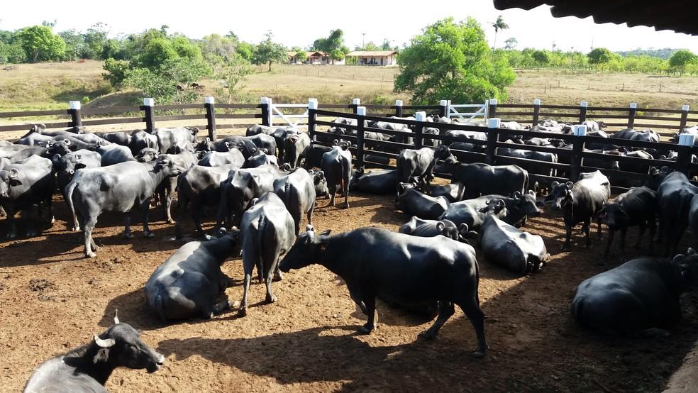 Evento capacita produtores rurais e traça estratégias para fortalecer o agronegócio no Amapá — Foto: John Pacheco/G1