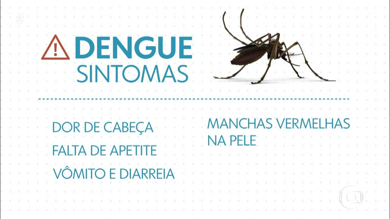 Diagnóstico de dengue em criança é mais difícil