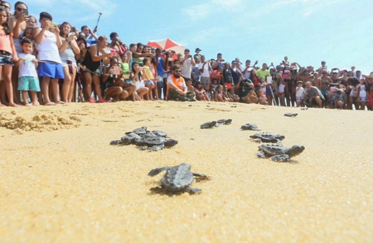 Praia do Farol, em Campos, RJ, terá nova soltura de tartarugas nesta sexta