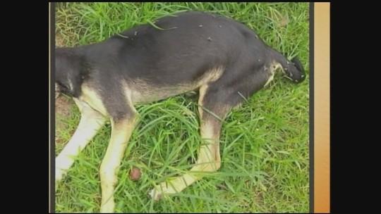 Pelo menos 40 cães morreram envenenados em 3 cidades de SC neste mês, dizem moradores