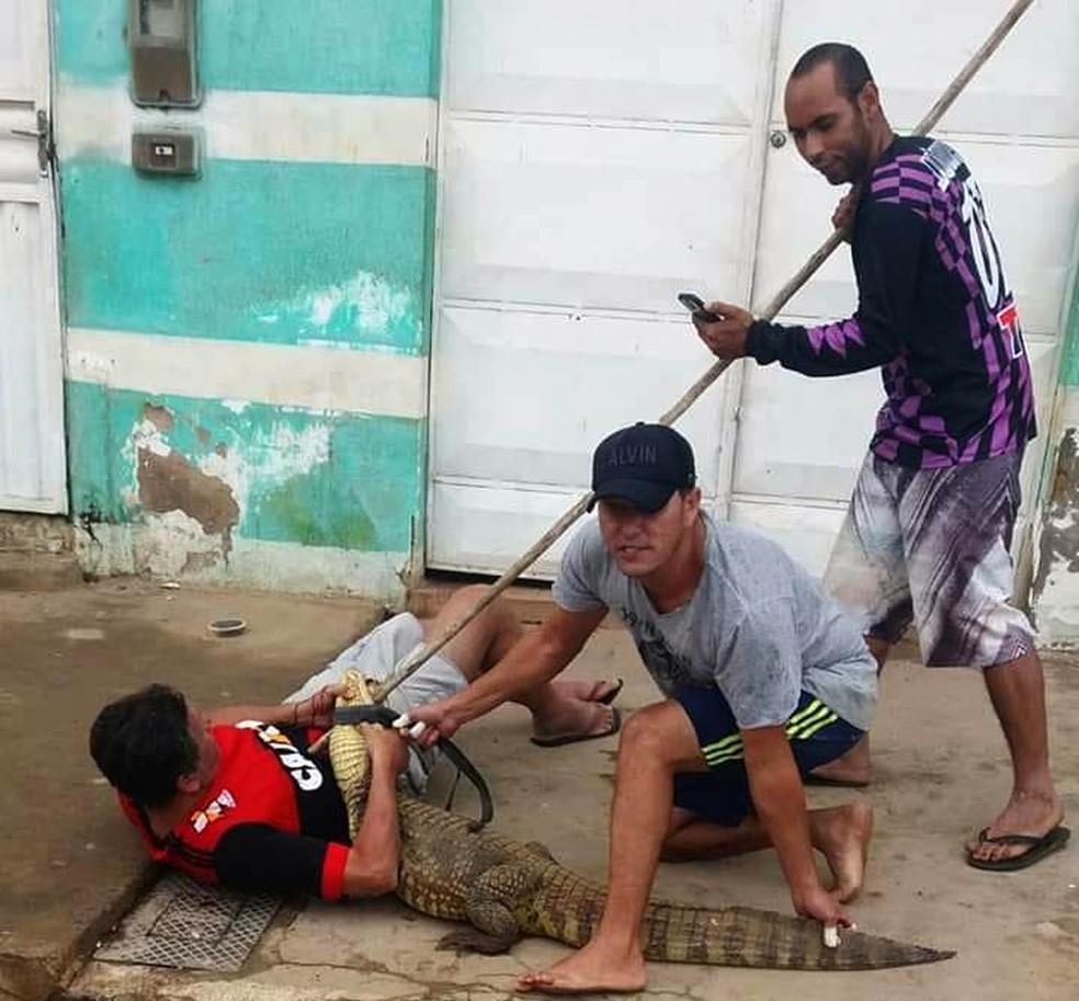 Jacaré morde homem ao ser capturado na Bahia — Foto: Site Central Notícias