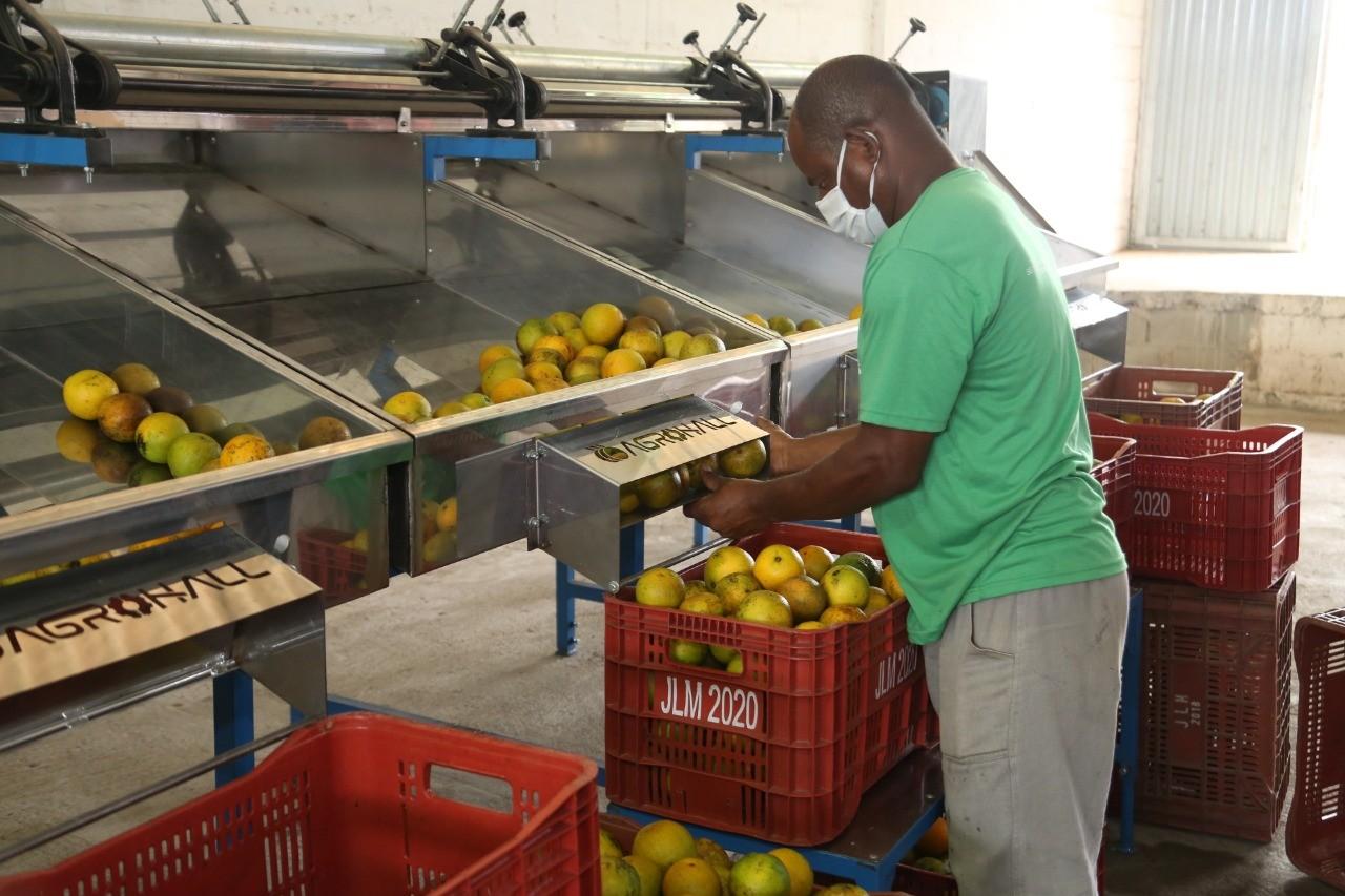 Máquina de beneficiamento de citrus vai fomentar agricultura e valorizar trabalho de produtores em Araruama, no RJ