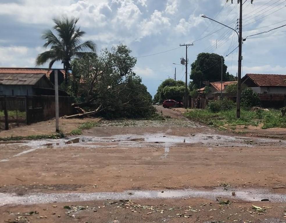 Árvores foram arrancadas durante temporal em Tangará da Serra — Foto: Reprodução