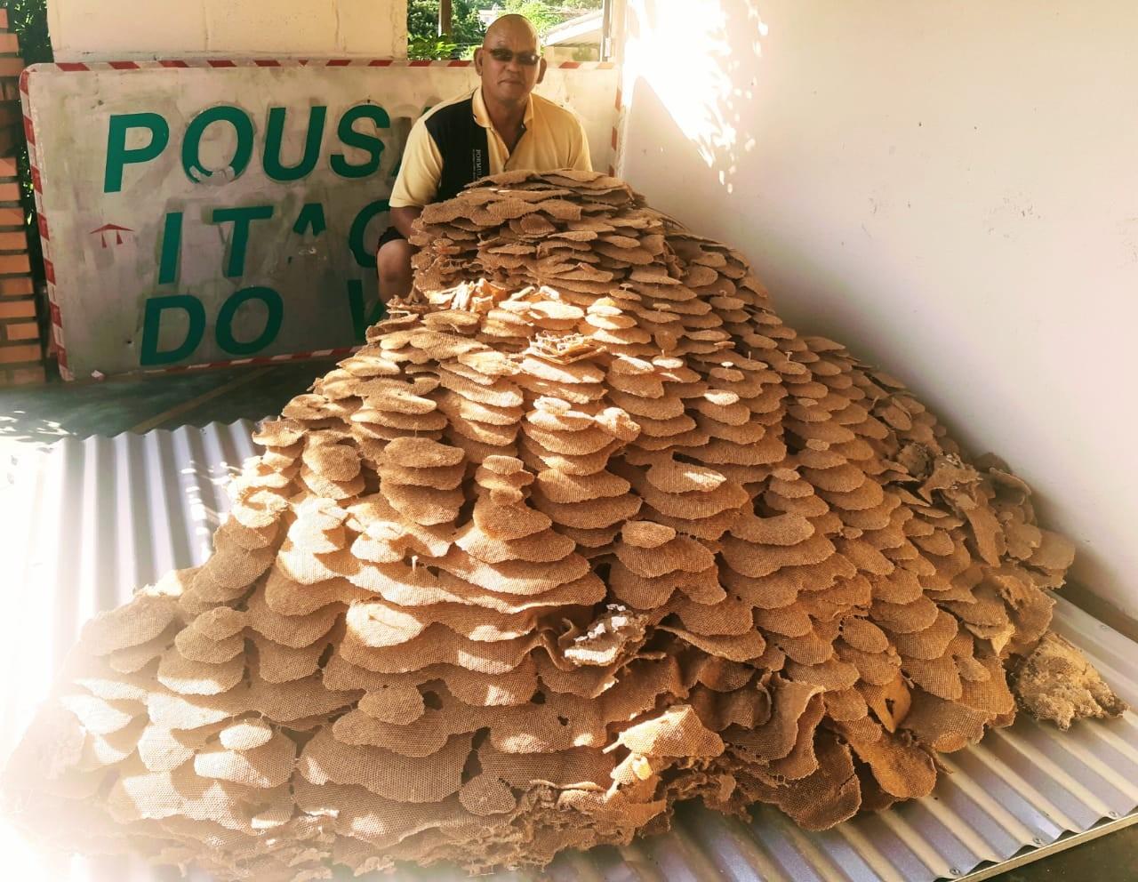 Moradores encontram ninho gigante de vespas em SP: 'Assustador'