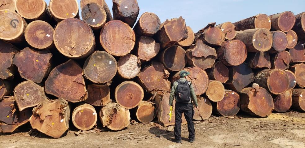 830 toras de madeira foram encontradas no pátio da empresa — Foto: Divulgação/Ipaam
