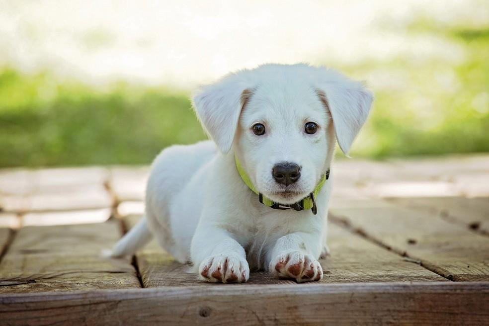 CRMV-RN faz alerta sobre riscos de deixar animal de estimação em locais que não seguem normas — Foto: Divulgação