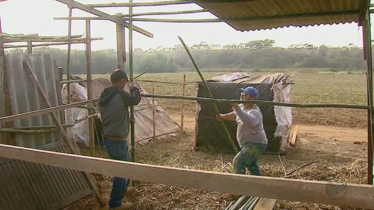 Famílias de Leme, SP, querem área da União para morar, criar animais e plantar