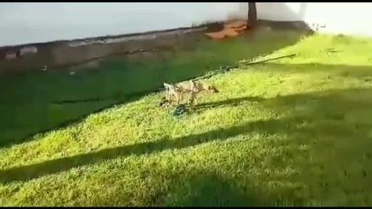 Cachorro ganha cadeira de rodas artesanal depois de ser atropelado e perder movimentos das patas em AL