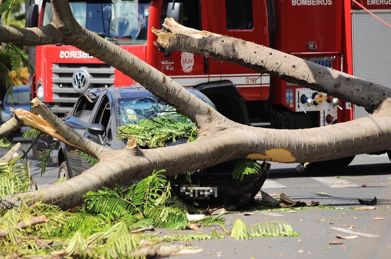 Queda de árvore em cima de carro pode ter sido causada por fungos, aponta laudo