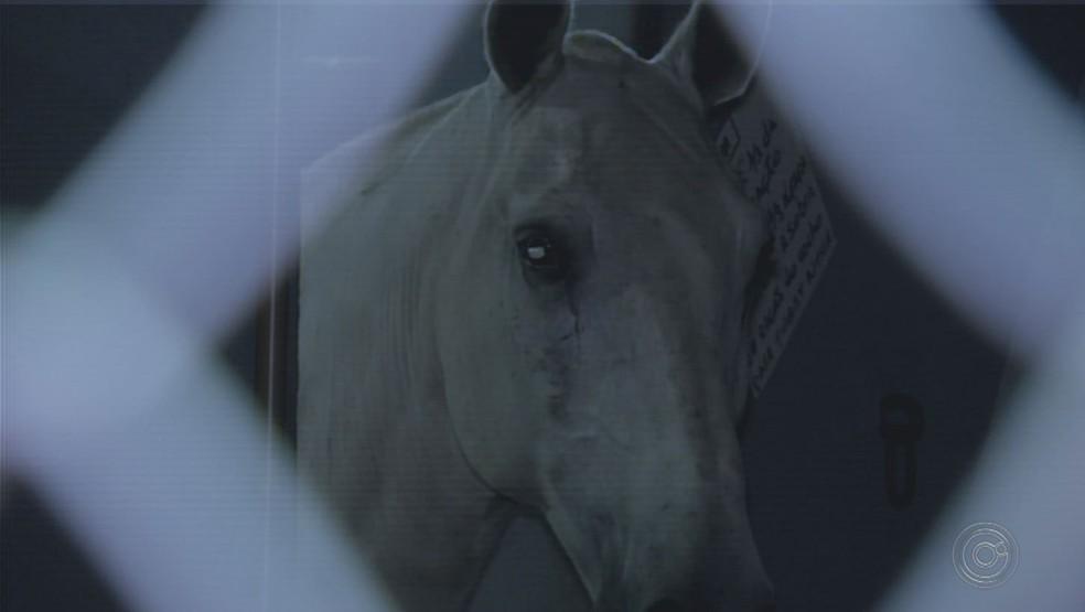 Cavalos da polícia foram atropelados em Avaré (SP) — Foto: Reprodução/TV TEM