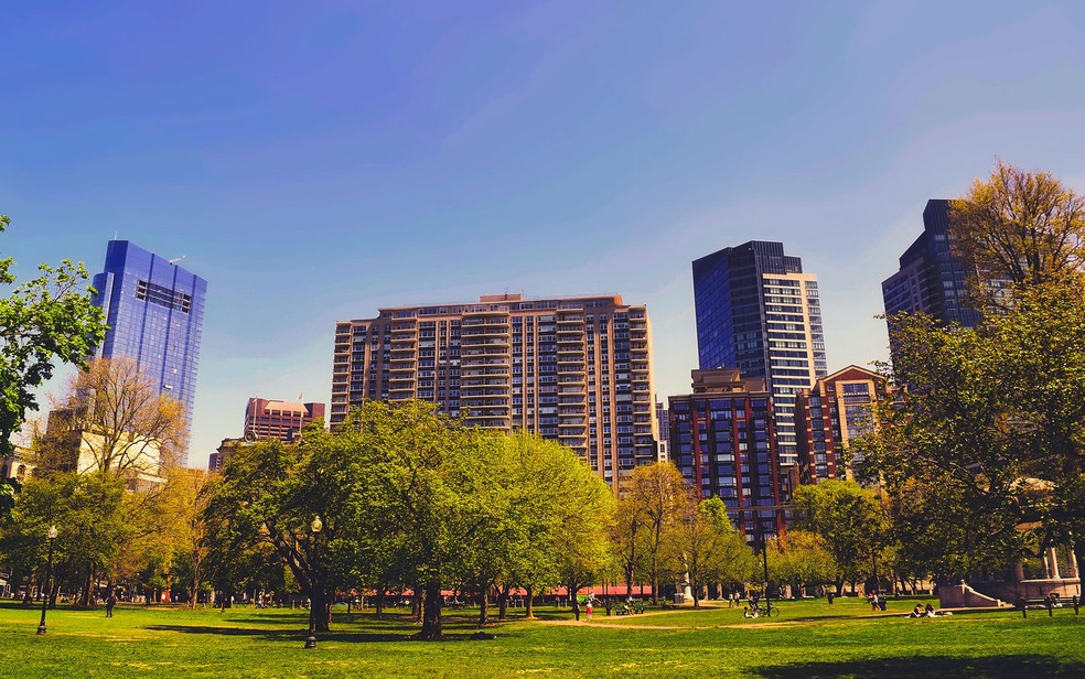 Estudo mostra que crescimento das árvores é mais acelerado em áreas urbanas (Foto: 12019/Creative Commons)