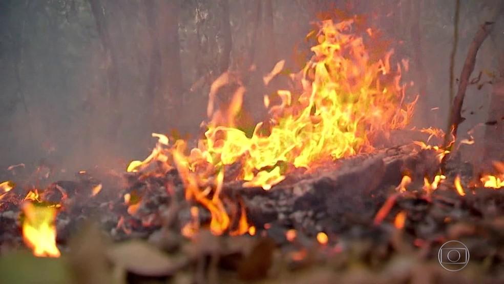 Incêndio no Pantanal já dura mais de uma semana — Foto: JN