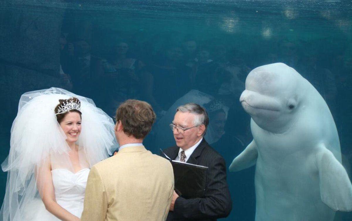 A beluga queria acompanhar tudo bem de perto