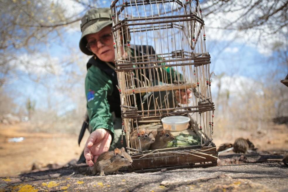 Animais silvestres são devolvidos à natureza em Alagoas — Foto: Jonathan Lins/FPI do São Francisco