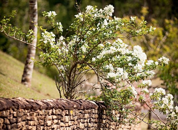 Seleção natural; primavera; 620x455 (Foto: Reprodução)