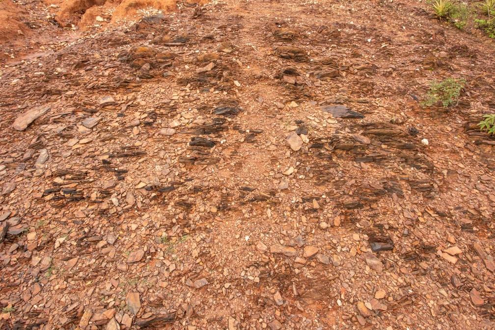 Detalhe do solo rochoso em uma área desertificada em Canudos (BA) — Foto: Celso Tavares/G1