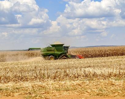 Colheita do milho segunda safra atinge 39% no Centro-Sul, diz AgRural