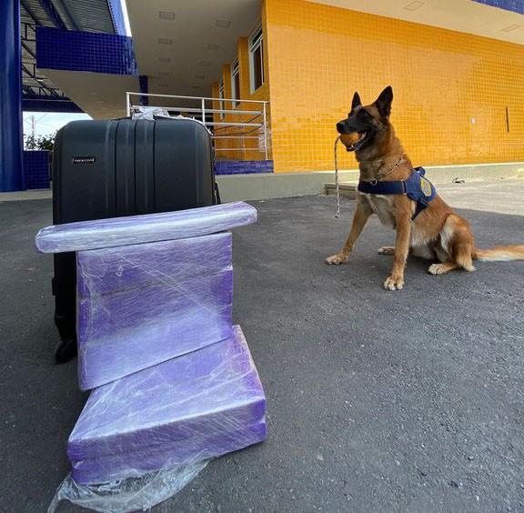Jovem é presa após cadela farejadora encontrar mais de 10 kg de maconha escondidos na bagagem dela, na BR-116
