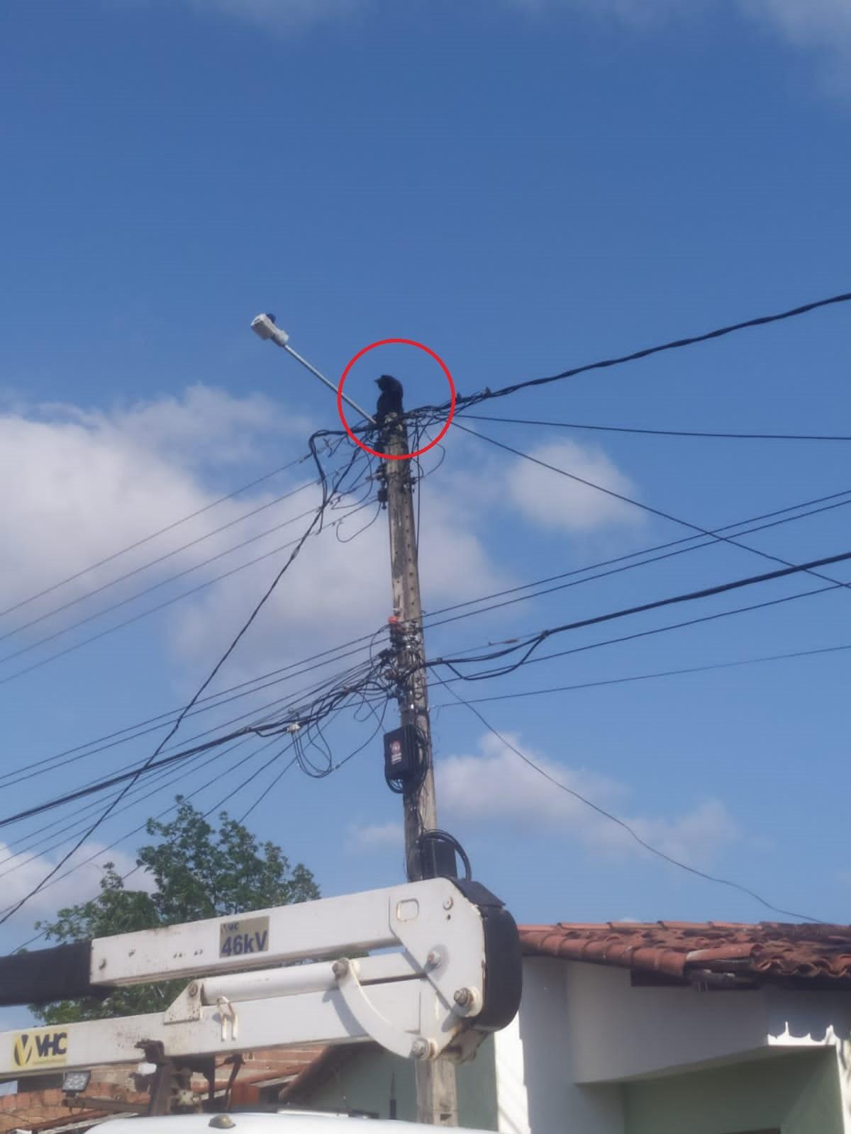 Gato é resgatado por equipe de companhia elétrica após passar 24 horas em cima de poste na Grande Natal; VÍDEO