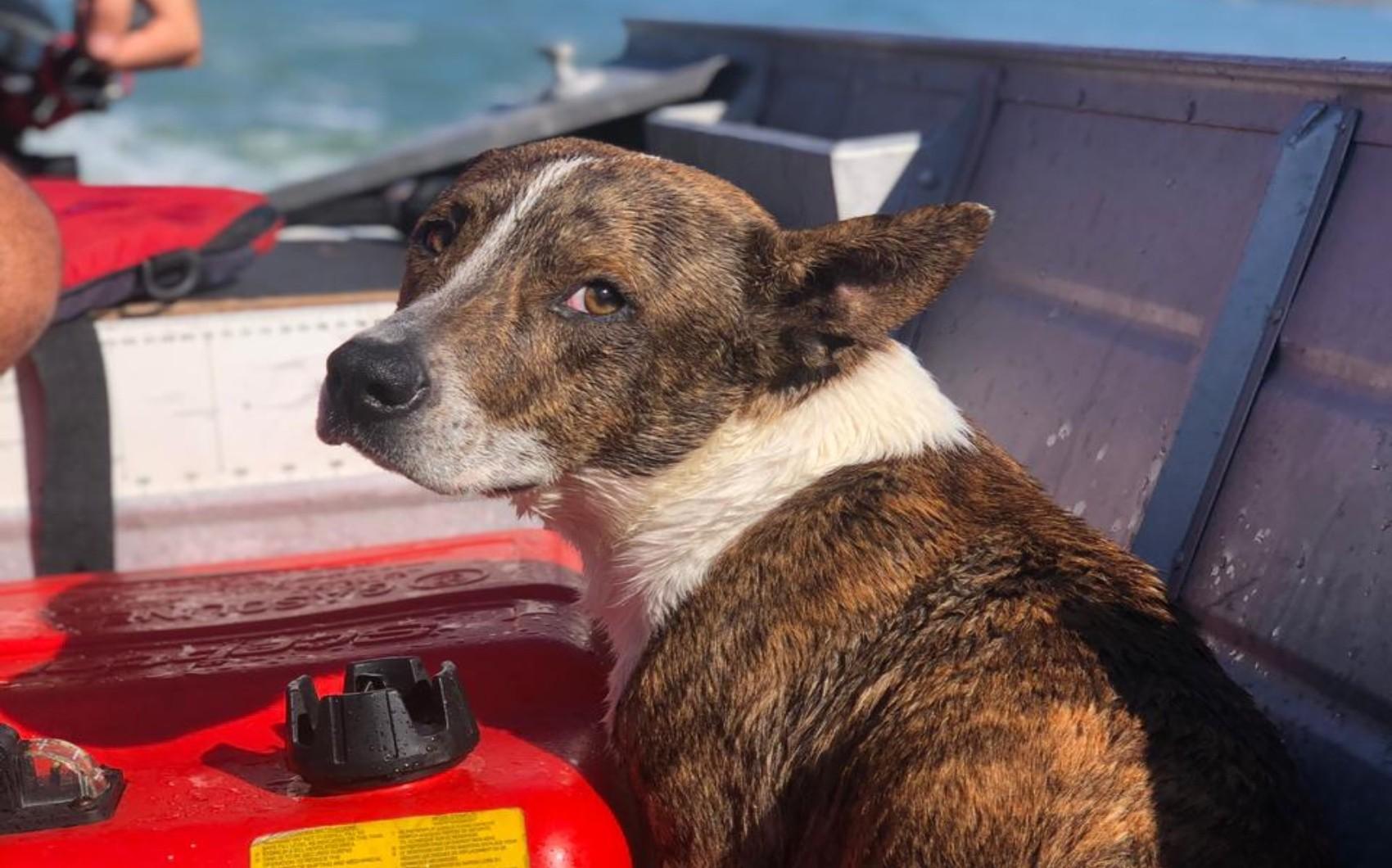 Cachorro cai no mar e é resgatado por bombeiros no sul da Bahia