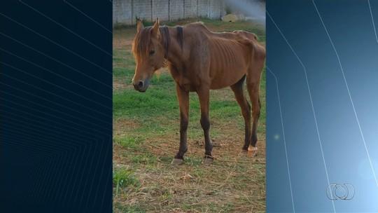 Haras é suspeito de maus-tratos após cavalos serem encontrados magros, em Senador Canedo