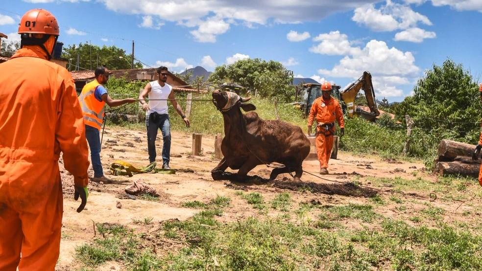 Animal resgatado após queda de barragem em Brumadinho, MG — Foto: Lucas Sandonato