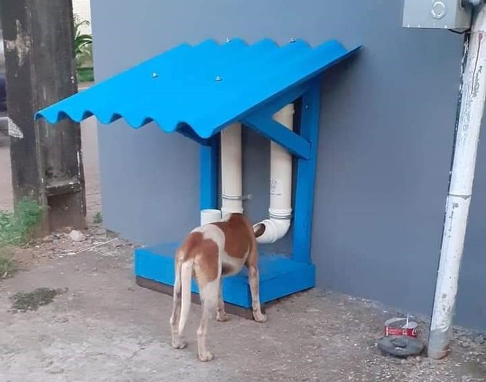 Comedouro e bebedouro para animais de rua em Porto Velho — Foto: Redes Sociais/Reprodução