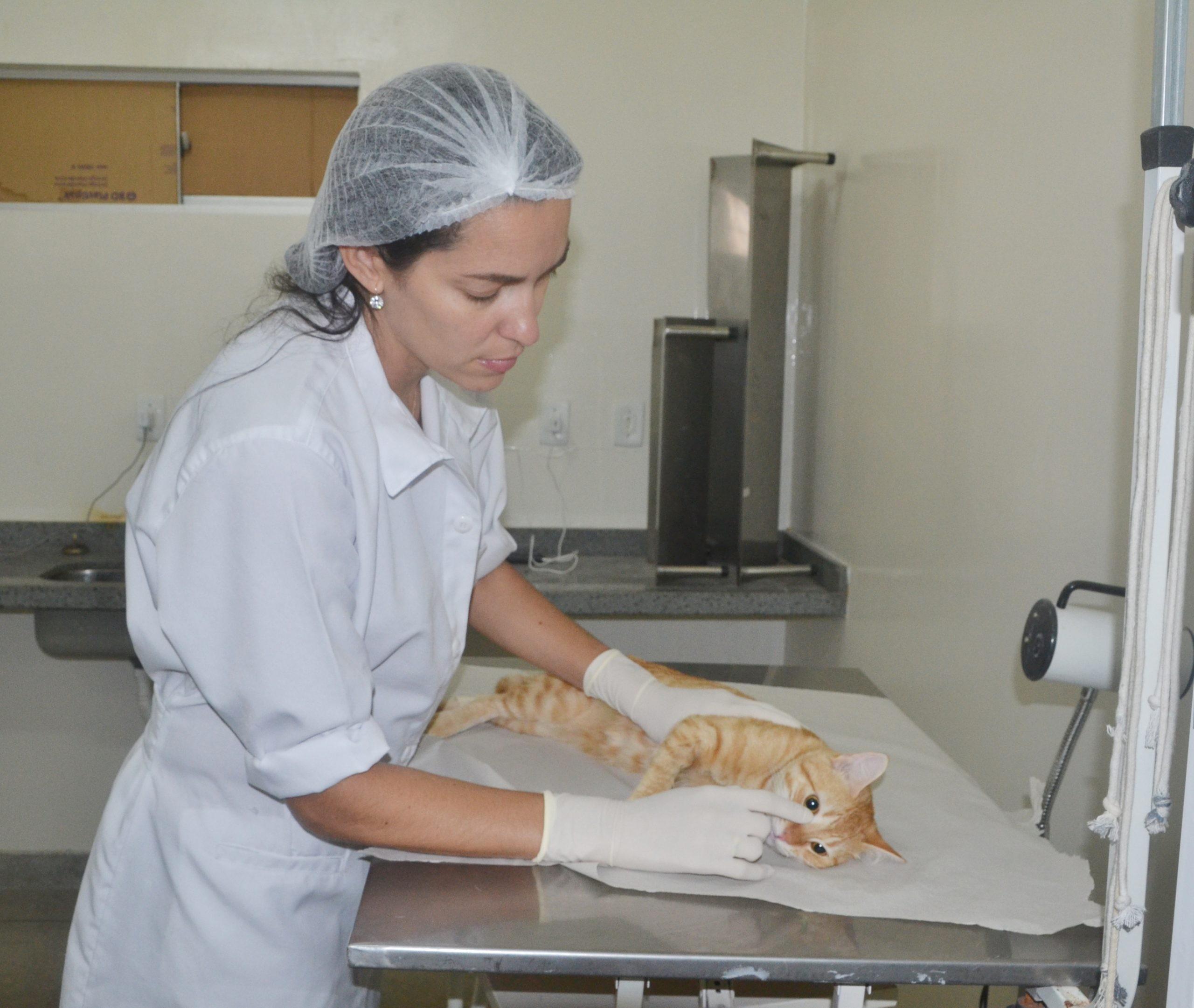 Agendamento para castração de cães e gatos acontece nesta sexta-feira, em João Pessoa