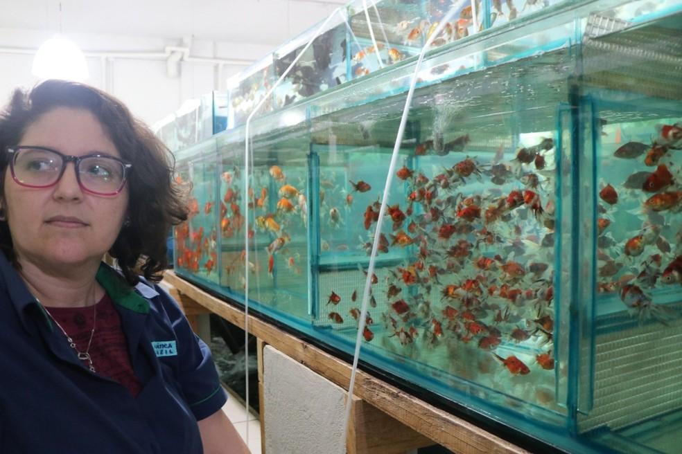 Especialistas dão dicas sobre prática de aquarismo e como manter peixes saudáveis  — Foto: Shyrlei Braith Bertorello/Arquivo pessoal