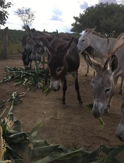 Bichos aguardam adoção enquanto são cuidados por voluntários de Frente Nacional de Defesa dos Jumentos  (Foto: Reprodução/Facebook Frente Nacional de Defesa dos Jumentos)