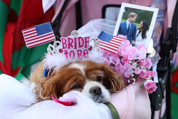 Ensaio do Casamento Real (Foto: Getty Images)