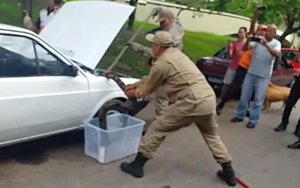 Bombeiros resgatam cobra no motor de veículo na Lagoa, Zona Sul do Rio — Foto: Reprodução / TV Globo