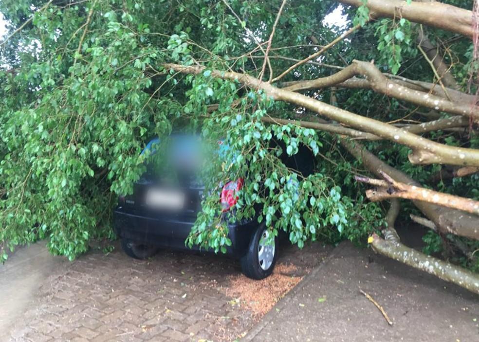 Veículo estacionado foi atingido por árvore, que caiu por causa dos ventos fortes durante chuva em Ariquemes.  — Foto: Jonas Cézar/Arquivo pessoal