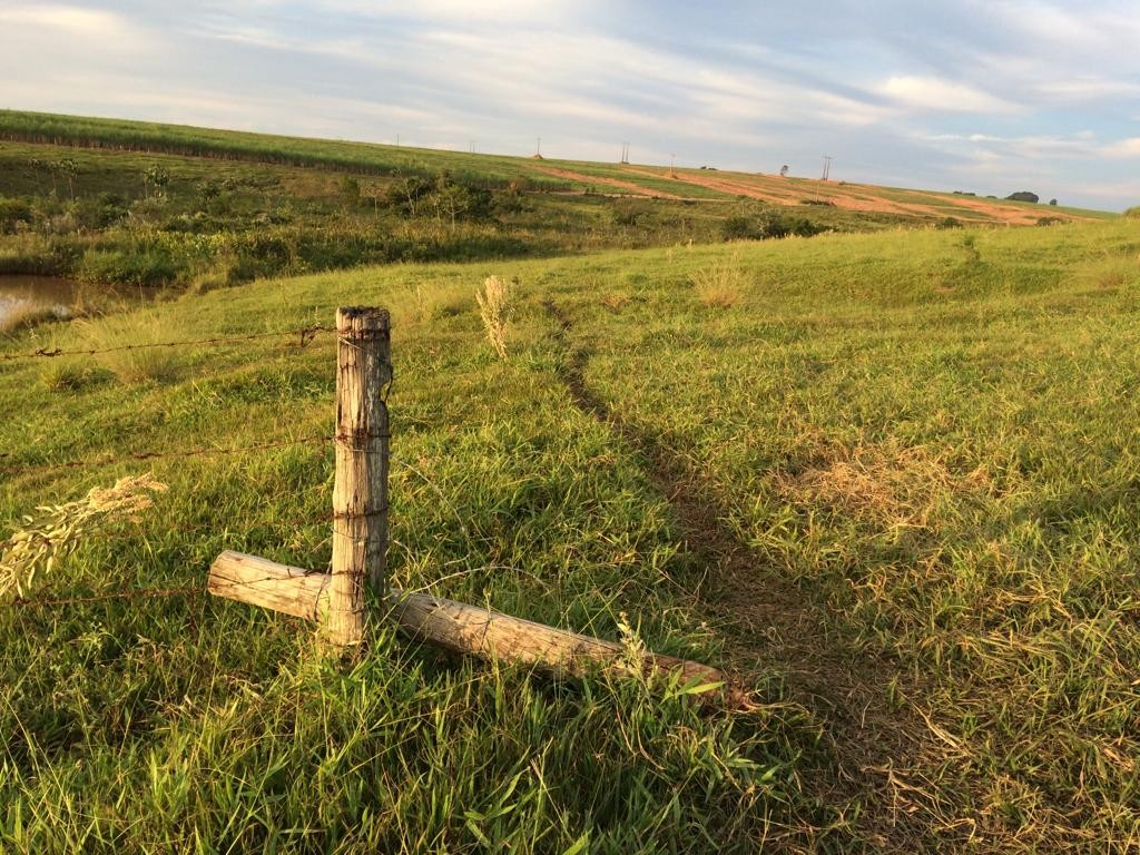 Ladrões furtam 68 cabeças de gado em fazenda de Pirajuí - Noticias