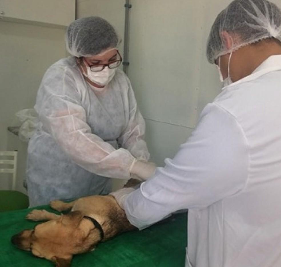 99 animais foram castrados em Formiga (Foto: Prefeitura Formiga/Divulgação)