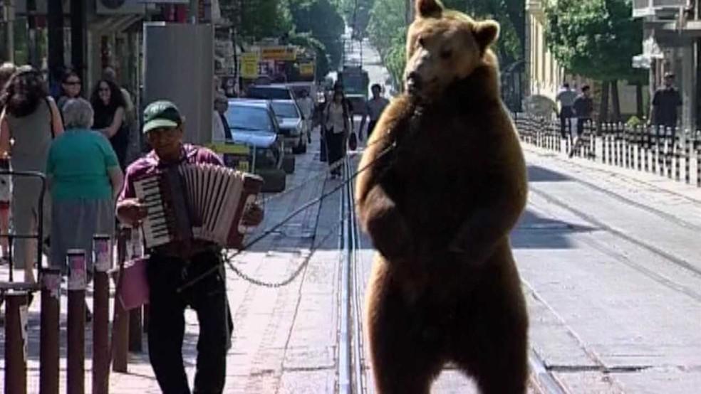 -  Em 1998, a prática de ursos dançarinos foi proibida, e a espécie ficou sob proteção  Foto: Reprodução/BBC