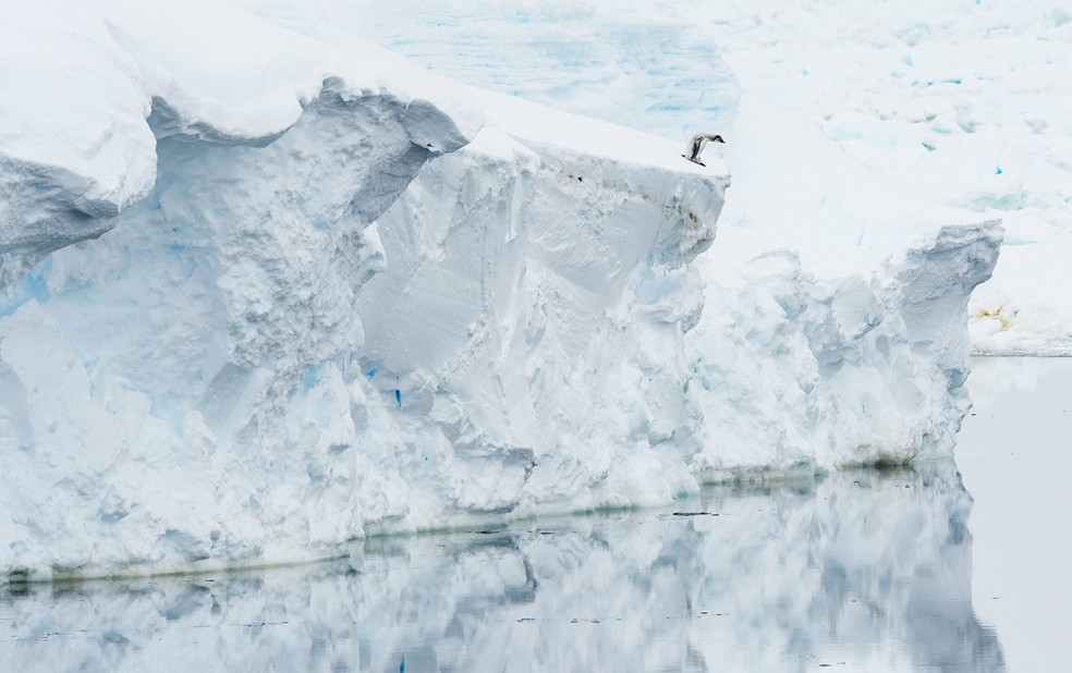 Um filhote de pinguim-imperador olha para o mar aberto — Foto: Ocean Photography Awards   Stefan Christmann