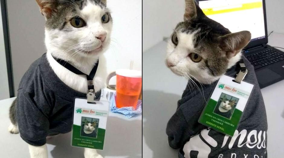 Gato (Foto: Divulgação)