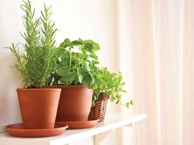 Horta em vasos: dicas e inspirações (Foto: Divulgação / Reprodução)