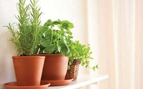 3 espécies superfáceis de cultivar para começar sua horta em casa