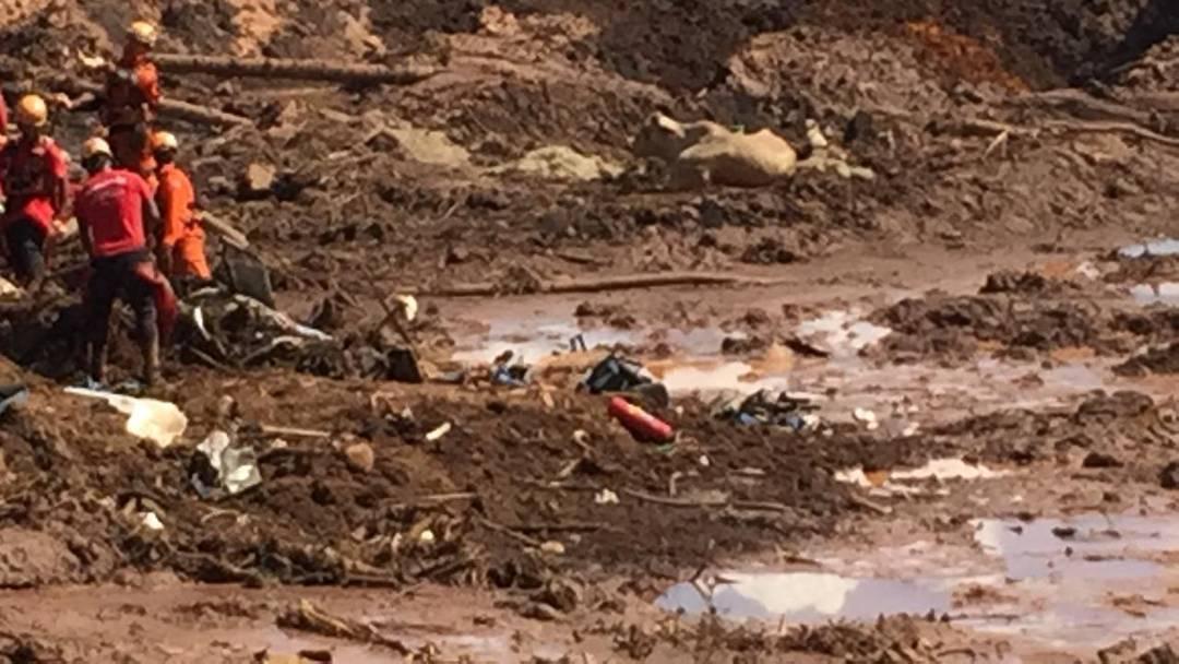 Boi ilhado deve ser sedado e retirado de helicóptero